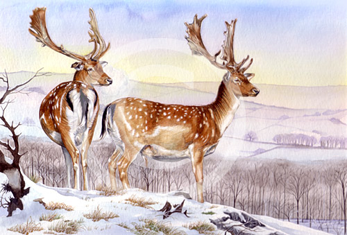 Deer by artist Miranda Gray